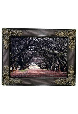 ARCHWAY OF TREES